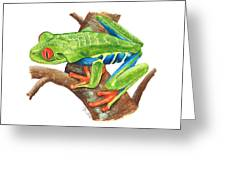 Red-eyed Treefrog Greeting Card by Cindy Hitchcock