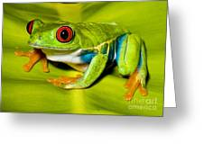 Red-eyed Treefrog Greeting Card