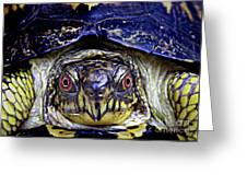 Red Eyed Turtle  Greeting Card