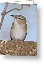 Red-eyed Vireo Greeting Card