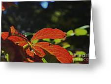 Red Fall Leaves Close Up Greeting Card