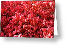 Red Fall Greeting Card