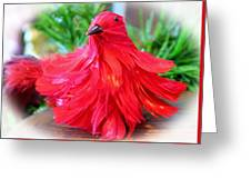 Red Feathers Greeting Card