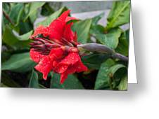 Red Flower After The Rain Greeting Card