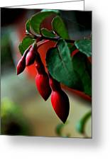 Red Flower Buds Greeting Card