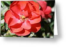 Red Flower I Greeting Card