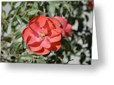 Red Flower II Greeting Card