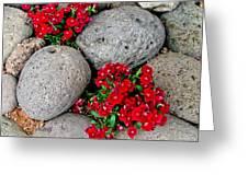 Red Flower In Rocks Greeting Card