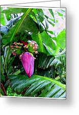 Red Flower Of A Banana Against Green Leaves Greeting Card