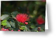 Red Flower Spraying Greeting Card