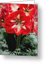 Red Flower With Starburst Greeting Card