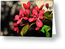 Red Flowering Crabapple Blossoms Greeting Card