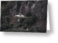 Red Footed Booby In Flight Greeting Card