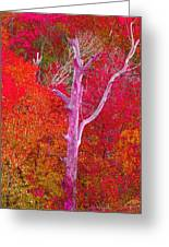 Pink Tree In A  Red Forest Greeting Card