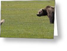 Red Fox  And Grizzly Bear Greeting Card