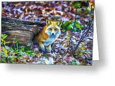Red Fox At Home Greeting Card