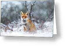 Red Fox Blue World Greeting Card