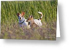 Red Fox Cub With Jack Russel Greeting Card