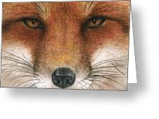 Red Fox Gaze Greeting Card