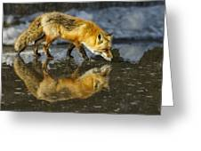 Red Fox Has A Drink Greeting Card