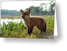 Red Fox Kit Greeting Card