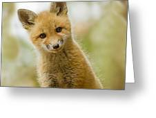 Red Fox Kit Up Close Greeting Card