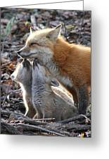 Red Fox Kits And Parent Greeting Card
