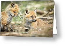 Red Fox Kits Greeting Card