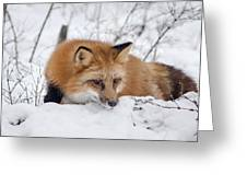 Red Fox Making Dinner Plans Greeting Card