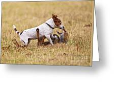 Red Fox Playing With Jack Russell Greeting Card