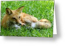 Red Fox Resting Greeting Card
