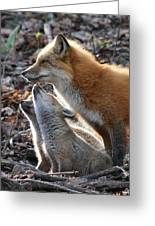 Red Fox With Kits Greeting Card