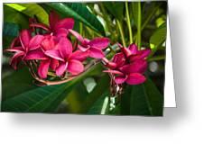 Red Frangipani Flowers Greeting Card
