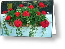 Red Geranium 1 Greeting Card