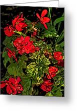 Red Geranium Line Art Greeting Card
