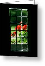 Red Geranium Through Leaded Window Greeting Card