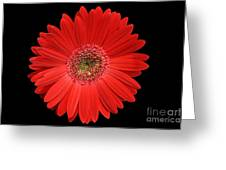 Red Gerber Daisy #2 Greeting Card