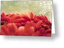 Red Gerbera With Green Background Greeting Card