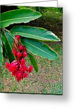 Red Ginger Chandelier Greeting Card