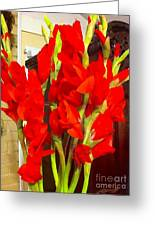 Red Glads Blooming Greeting Card