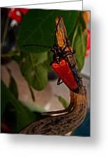 Red Glowing Beetle Greeting Card