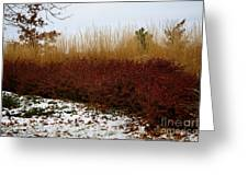 Red Gold Hedge Greeting Card