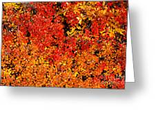 Red-golden Alpine Shrubs Greeting Card
