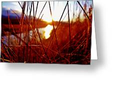 Red Grass Greeting Card