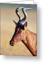 Red Hartebeest Portrait Greeting Card