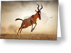 Red Hartebeest Running In Dust Greeting Card by Johan Swanepoel