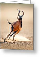 Red Hartebeest Running Greeting Card