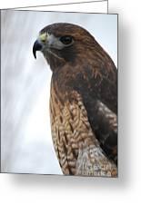 Red Hawk I Greeting Card by Sharon Elliott