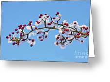 Red Haws Frosted By Snow Greeting Card