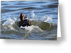 Red Head Duck Resurfaces With A Splash Greeting Card